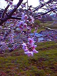 Image7398