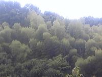 Image8439