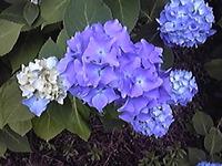 Image8563
